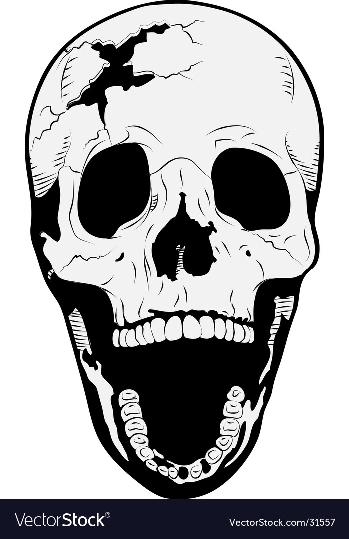 skull royalty free vector image vectorstock rh vectorstock com vector skull images vector skull free