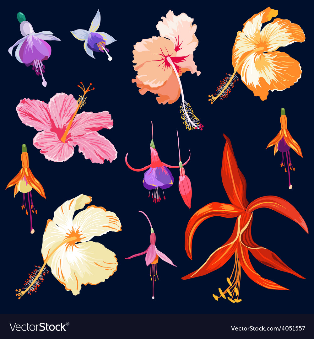 Tropical Flowers in Watercolor Style