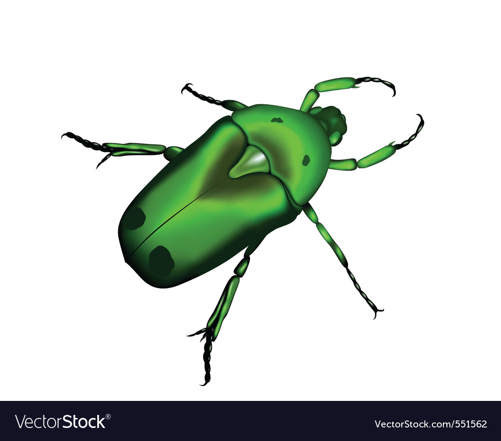 Beetle a silhouette in vector
