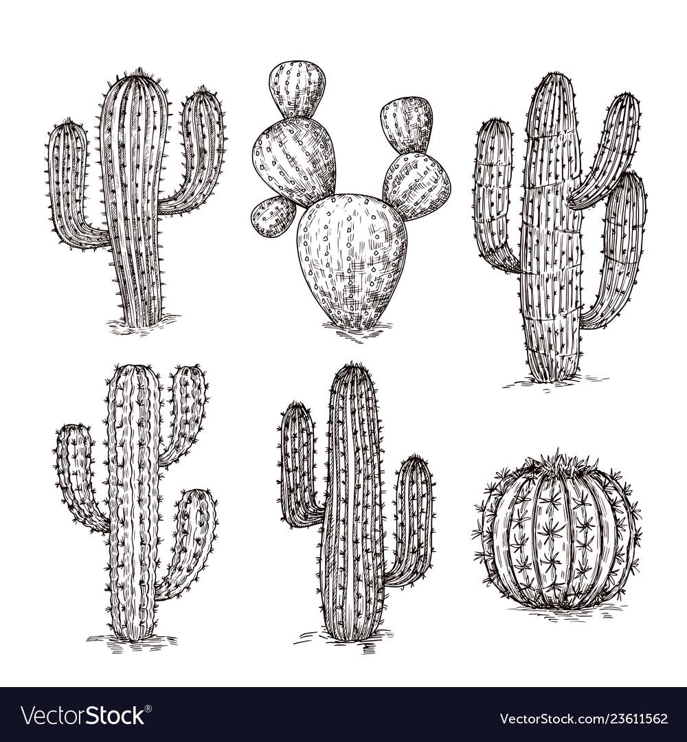 Sketch cactus hand drawn desert cactuses vintage