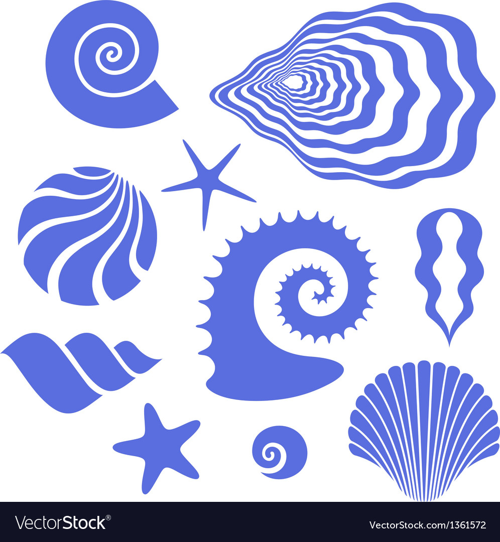 Shell vector image