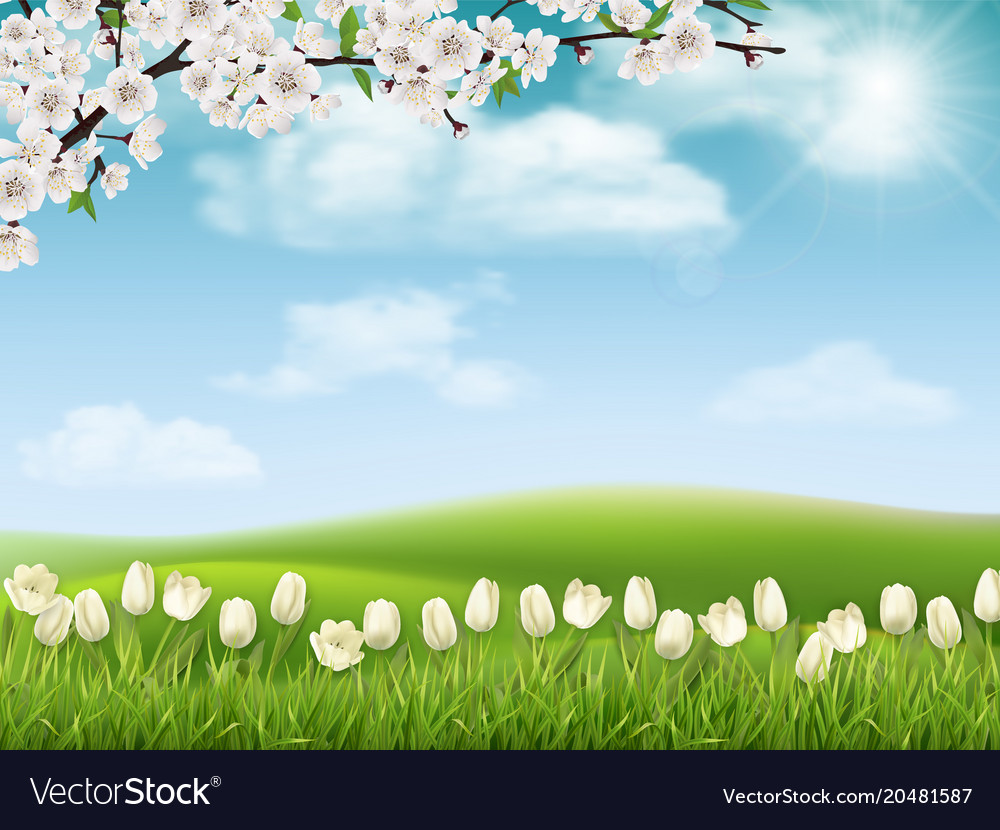 Spring Landscape With Tree Branch And Flowers Vector Image