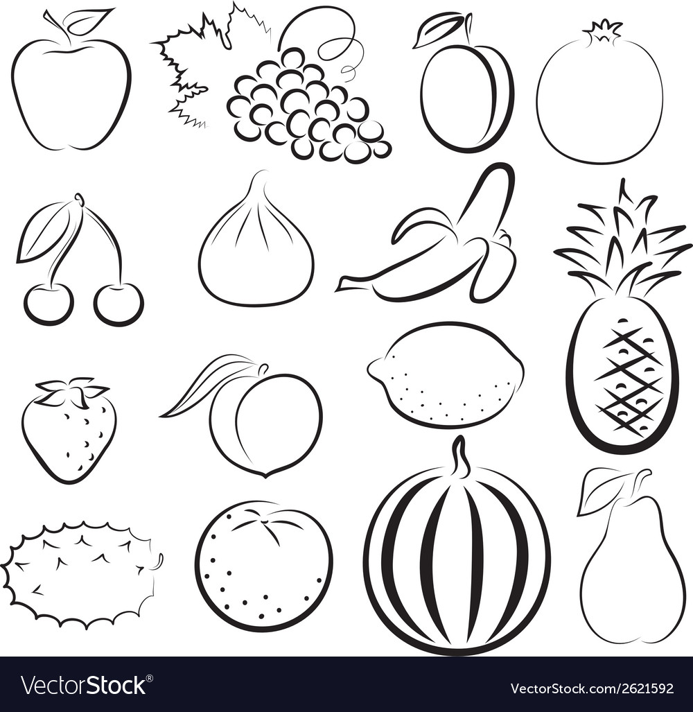 Sketch of different fruits vector image