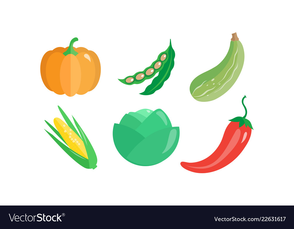 Collection of vegetables pumpkin green bean