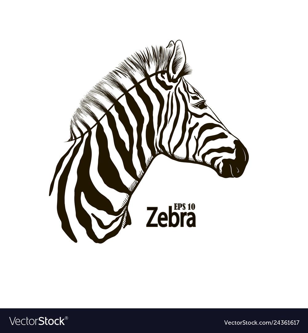 Zebra beautiful animal pattern