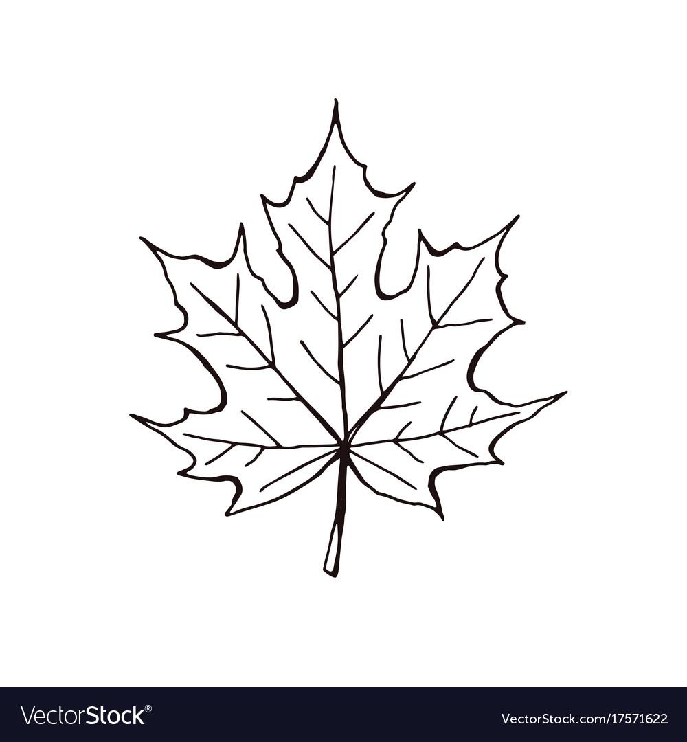 Leaf icon isolated