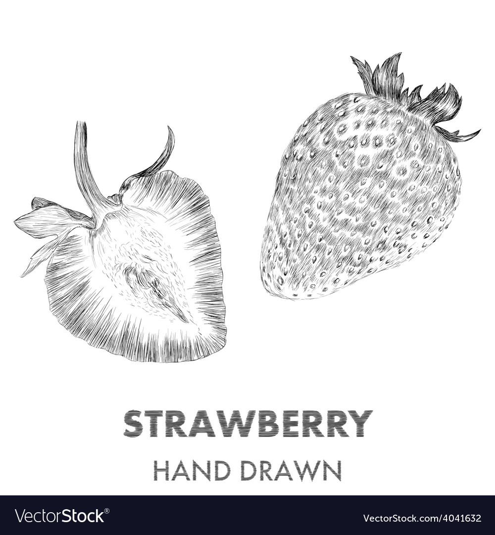 Sketch of strawberry Hand drawn Fruit collection