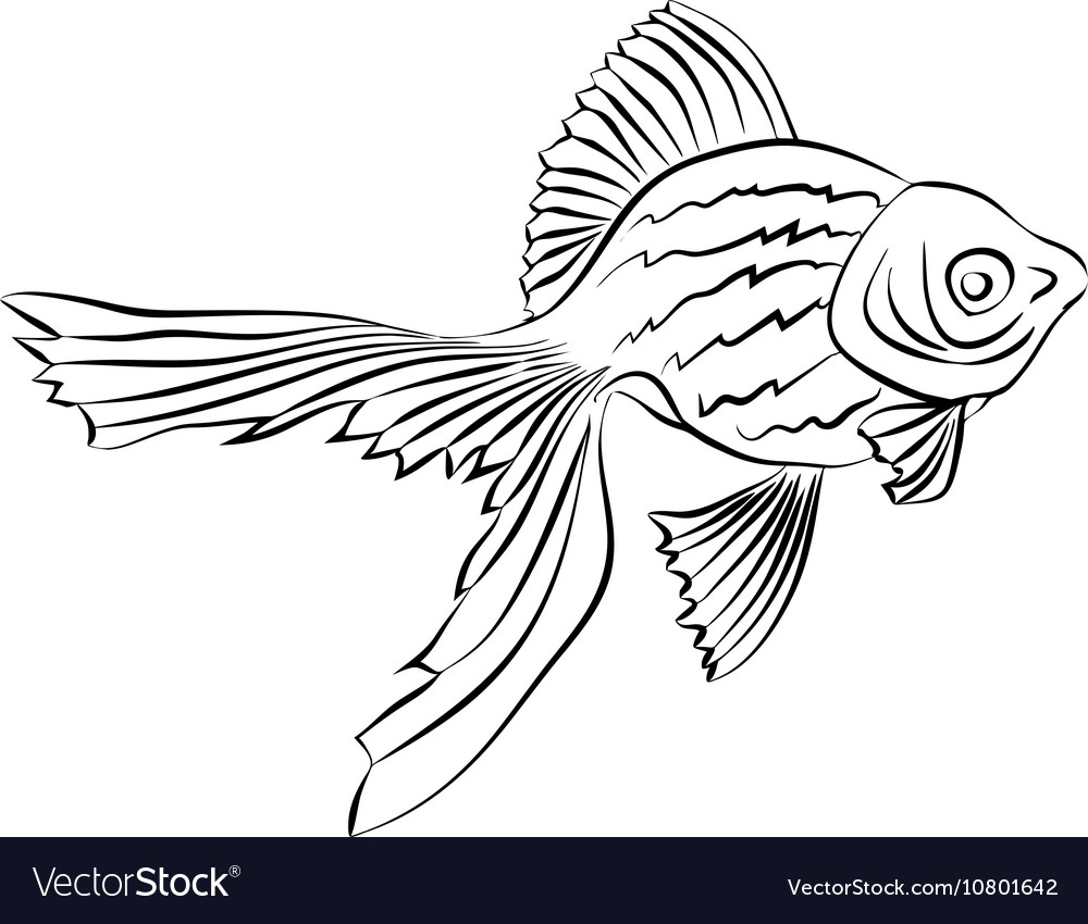 Goldfish image on white background vector image
