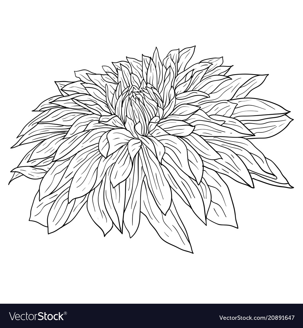 Beautiful Single Daisy Flower Outline Hot Winx Coloring Pages