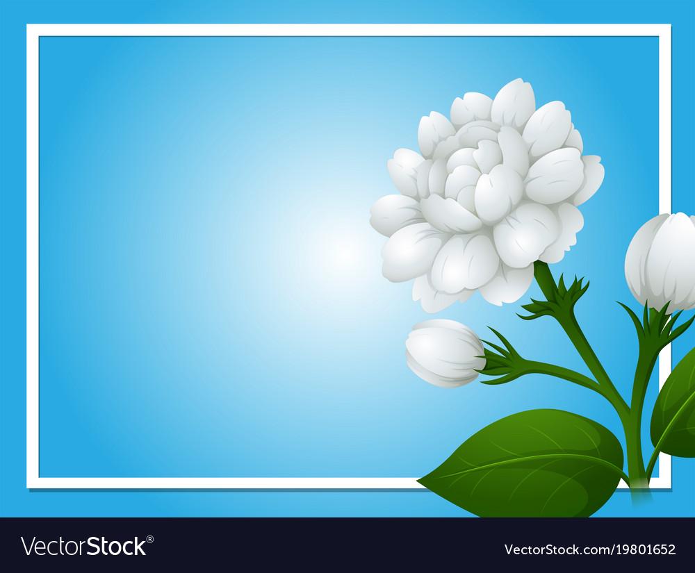 Border template with white jasmine flowers vector image izmirmasajfo