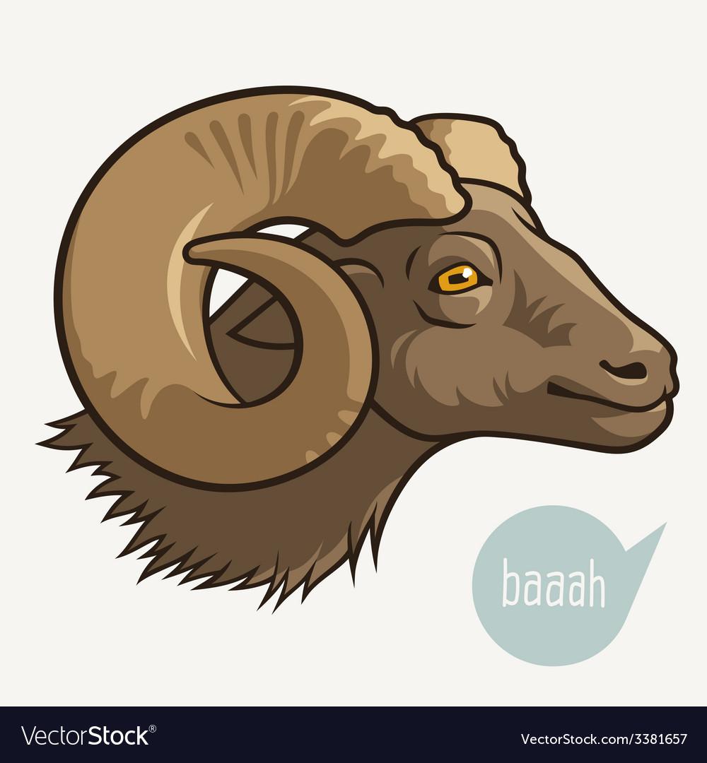 Head of ram