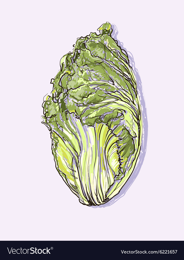 Realistic hand drawing set of vegetables vector image