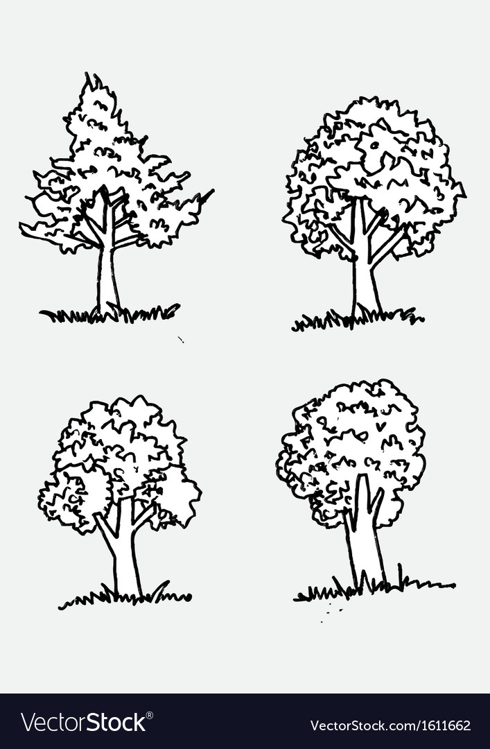 Trees with leaves in