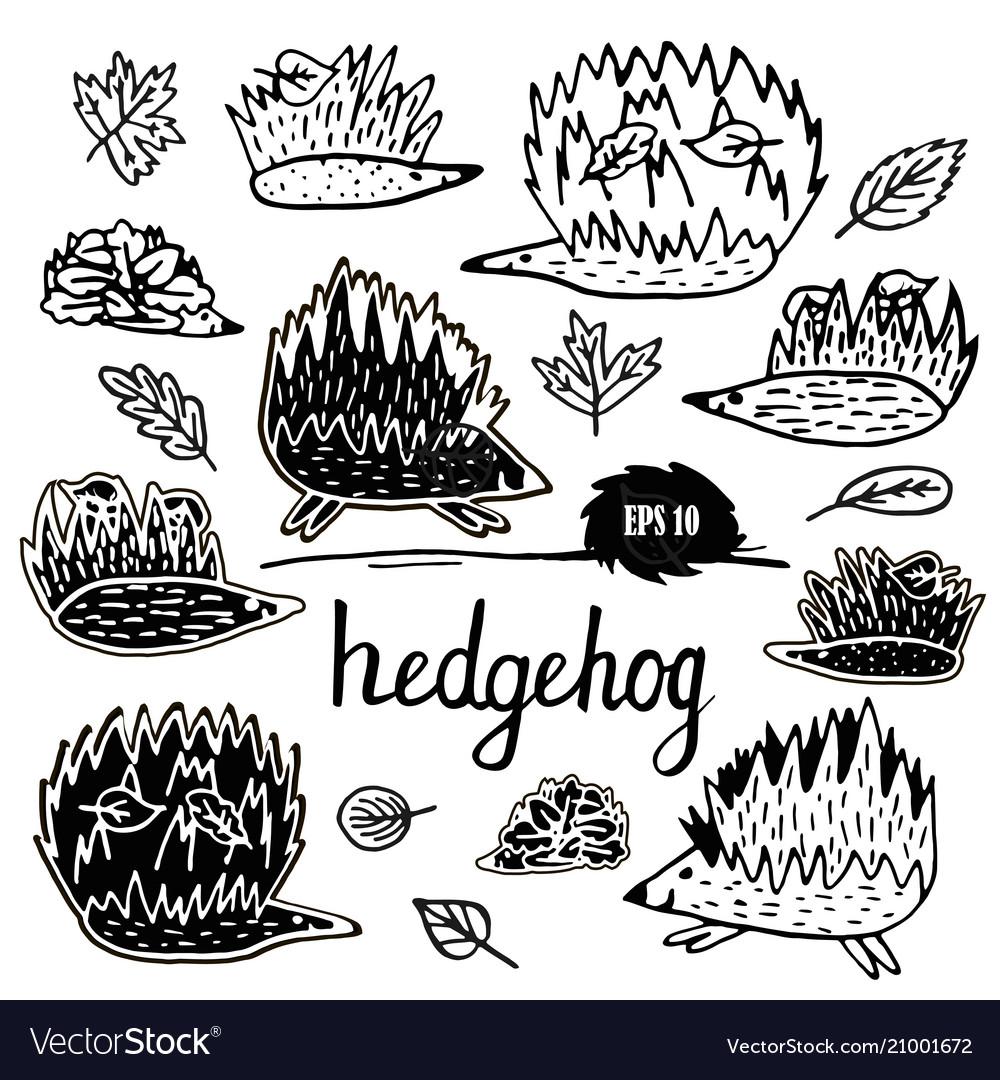 Hedgehog set hand drawn figures