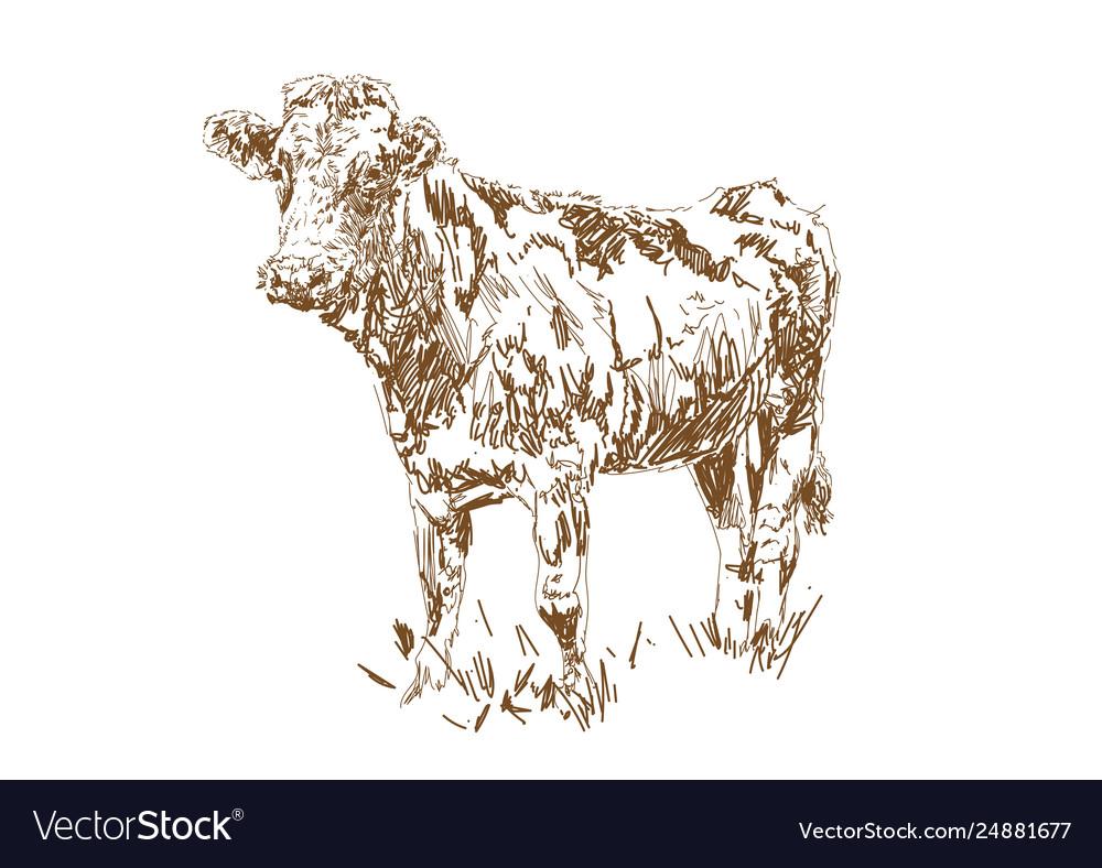 Dairy farm farm animal cow graze in meadow