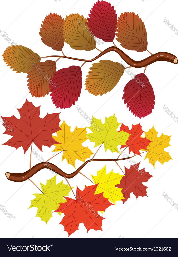 Elm and maple leaves