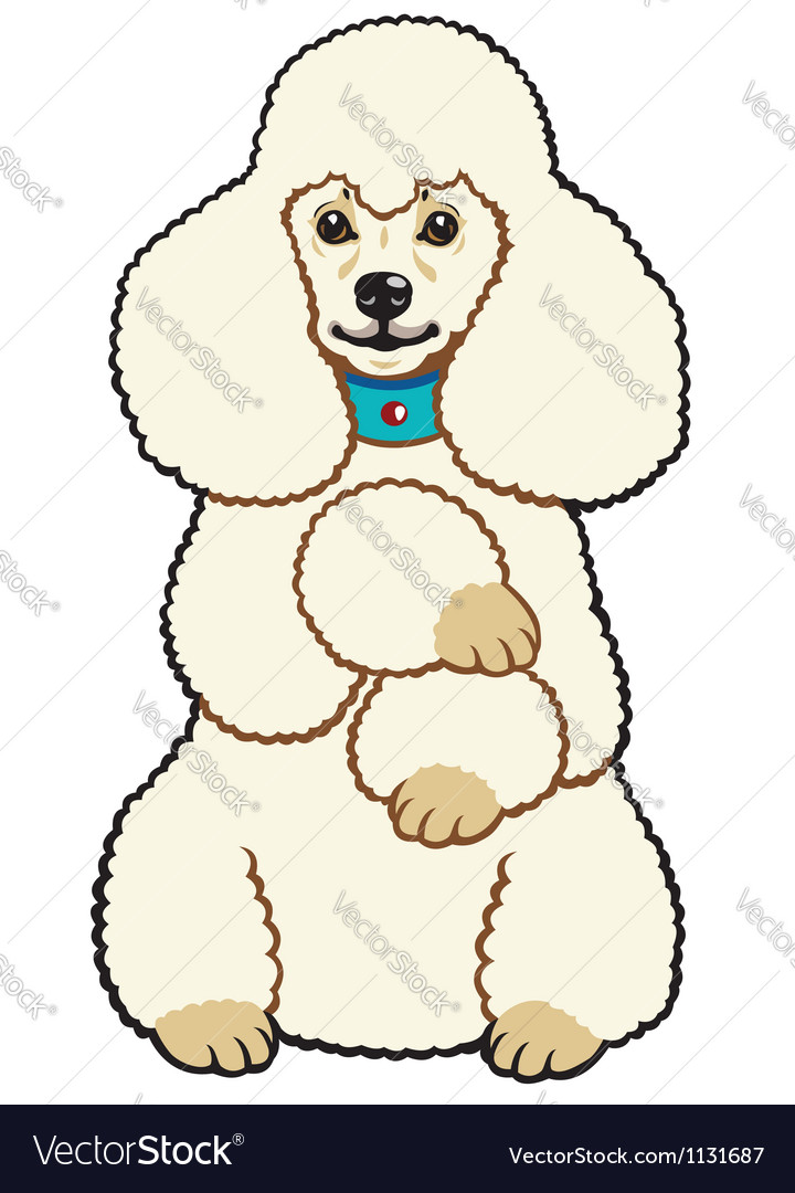 White poodle vector image