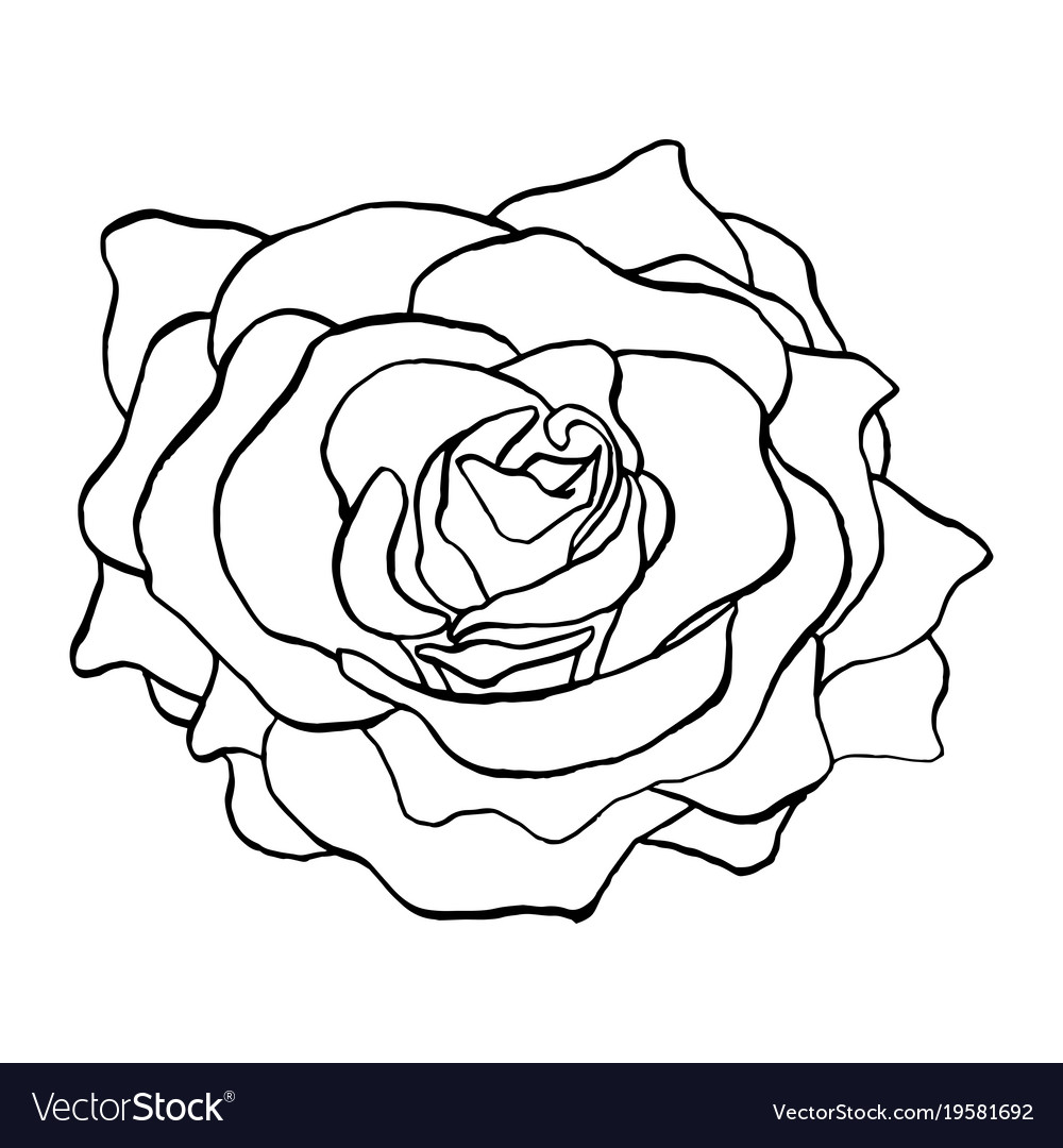 Rose Flower Bud In Outlines Blossoming Single Vector Image