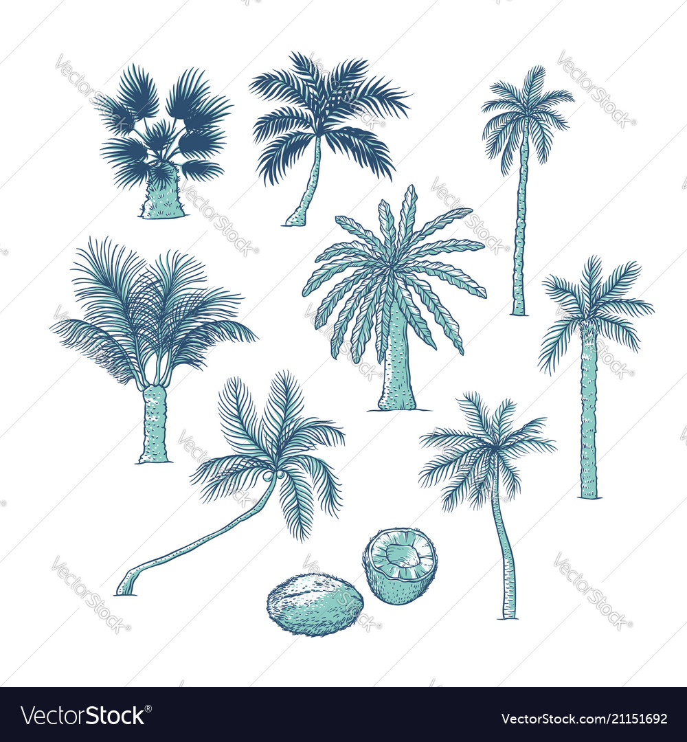 Set of palm different kinds of tropical