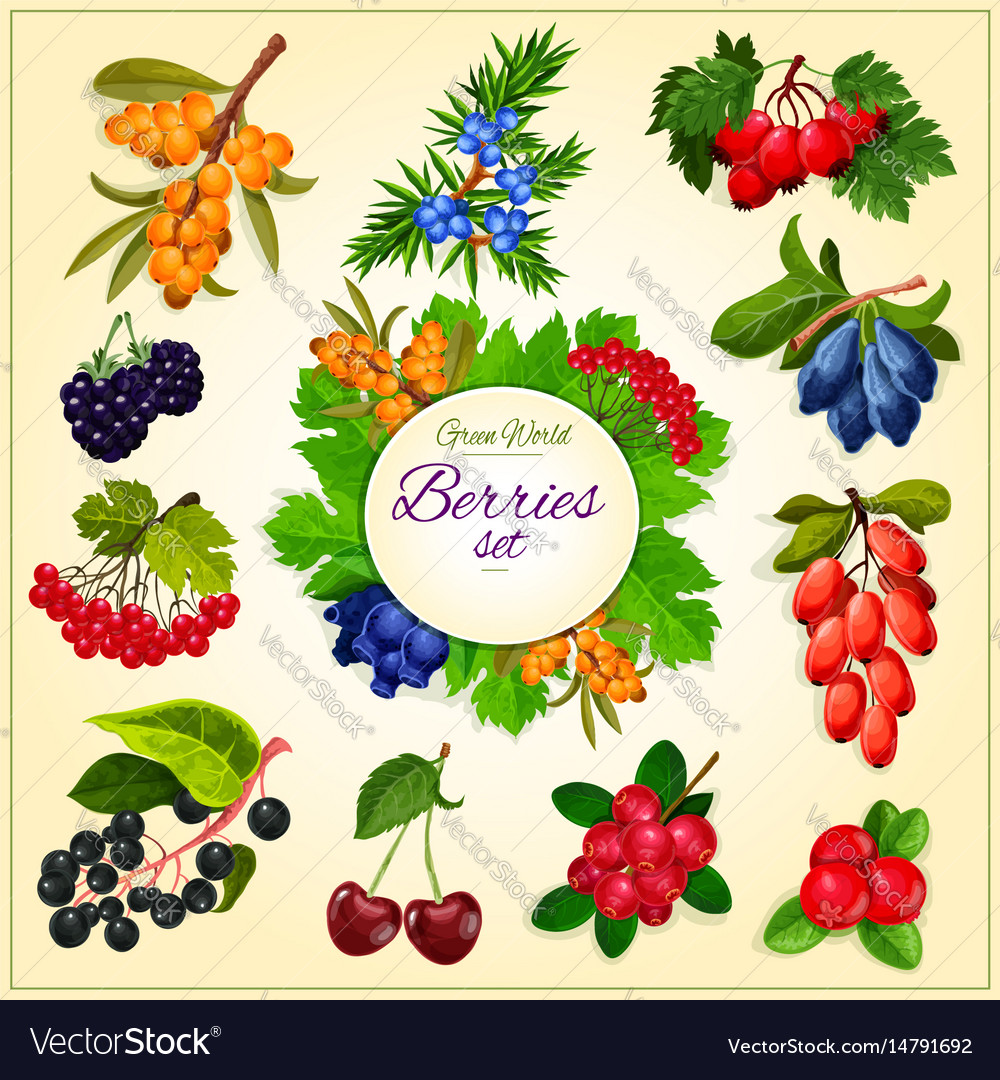 Wild berries and fruits set poster