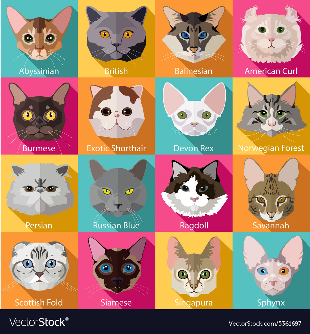 Set of flat popular breeds of cats icons