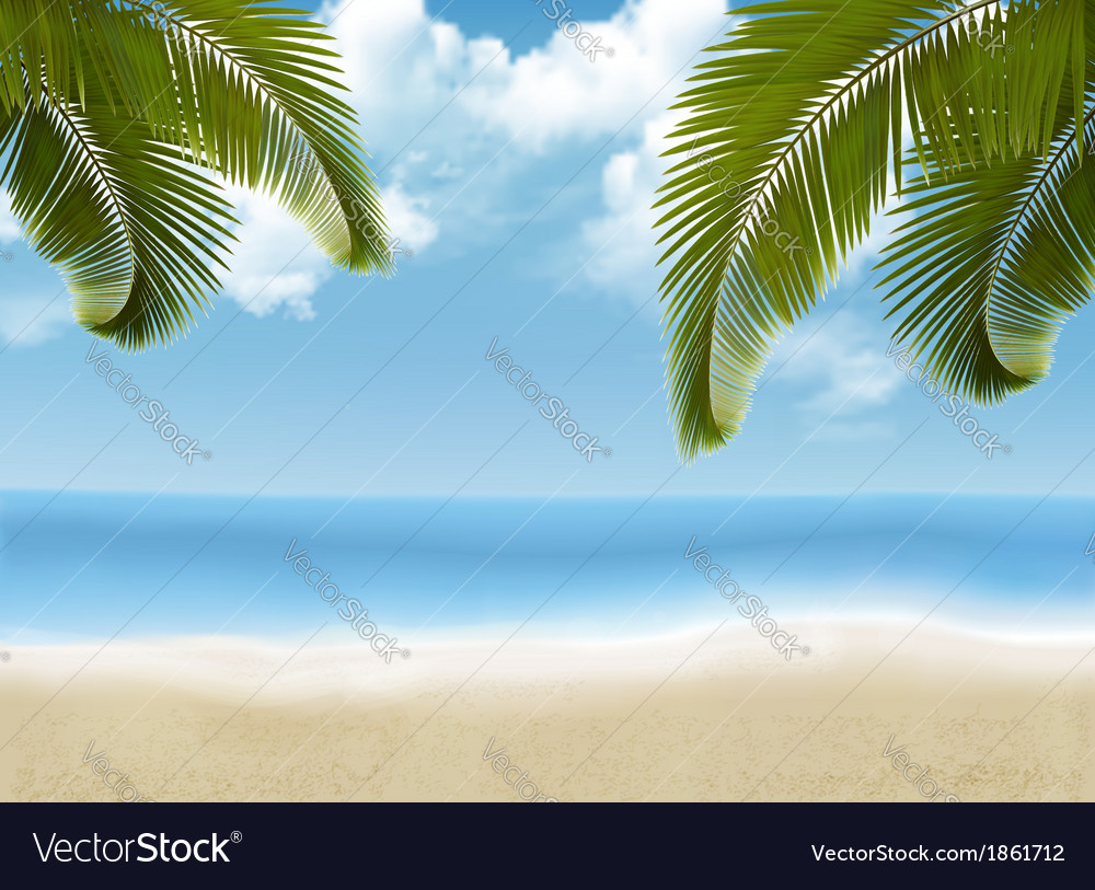 Palm leaves on beach vector image
