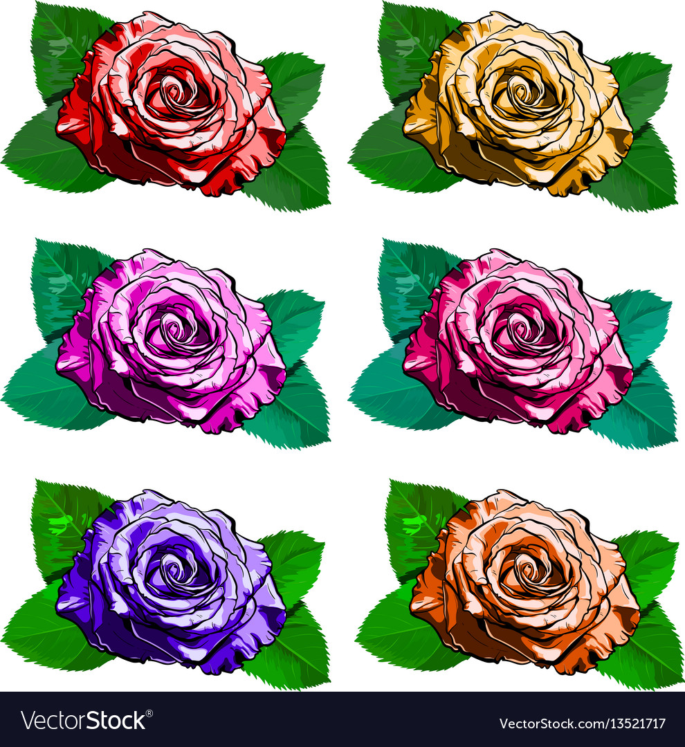 Beautiful set of different roses hand-drawn