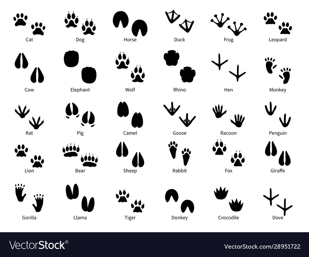 Animal footprints walking track animals paw vector