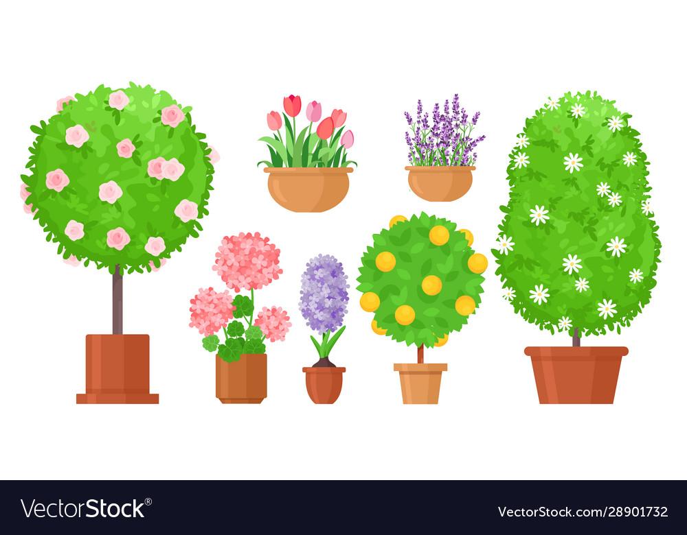 Garden flowers in pots flat