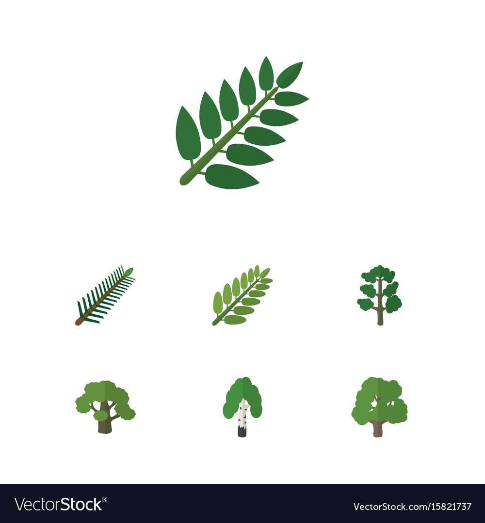 Flat icon nature set of acacia leaf timber tree vector image