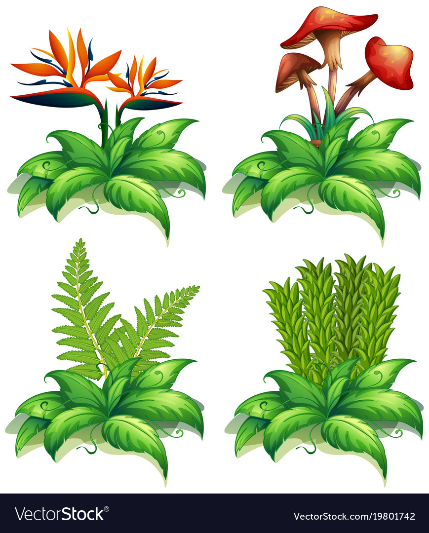 Four Different Types Of Plants On White Background