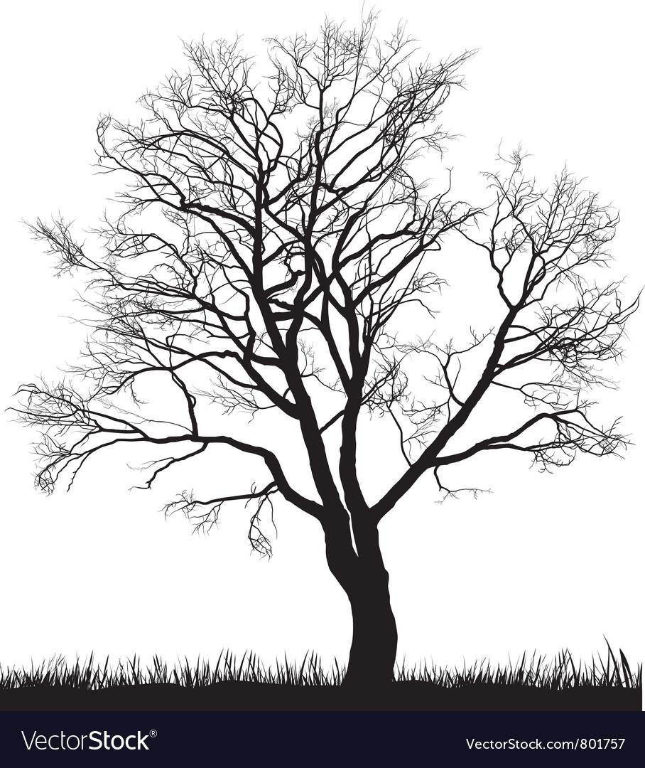 Walnut tree in winter vector image