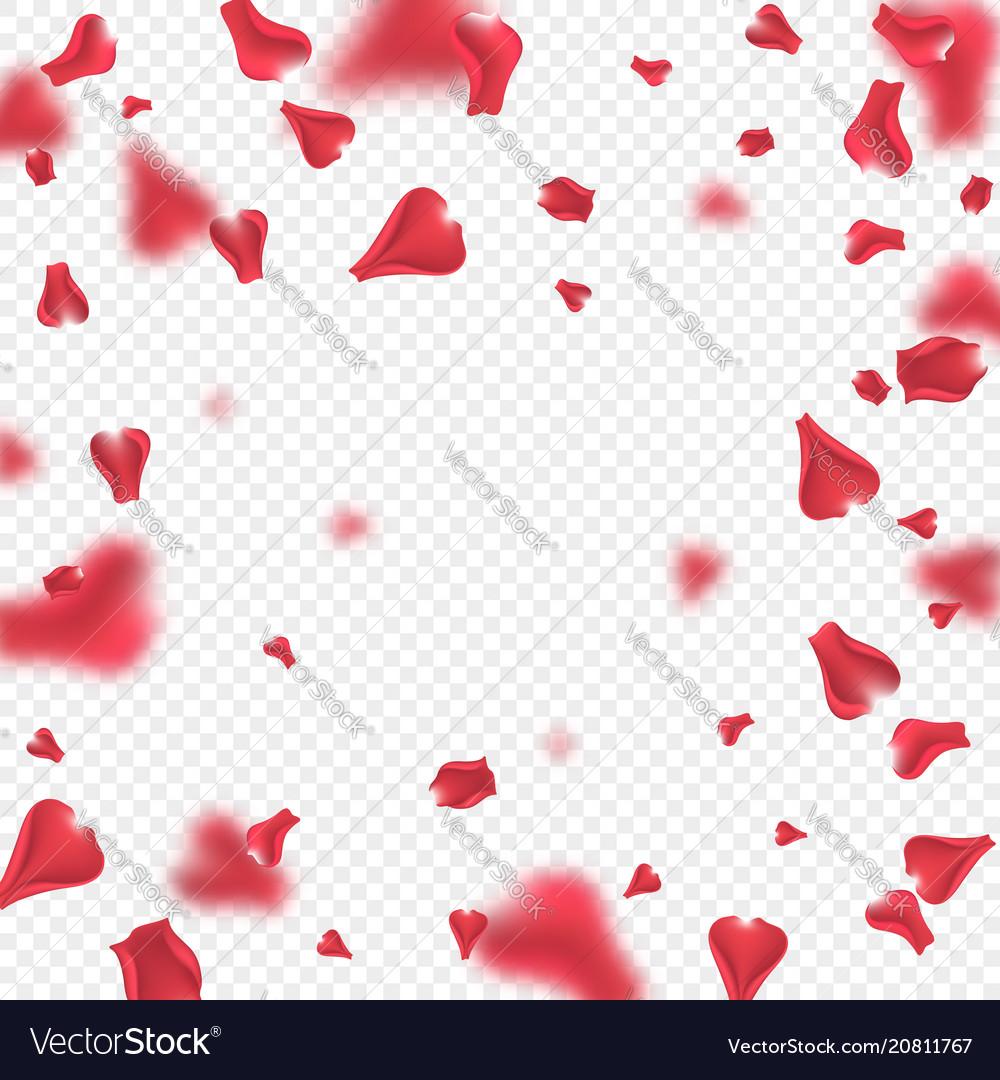 Flying rose petals background vector image