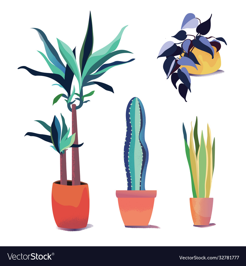 Collection plants in different pots home decor