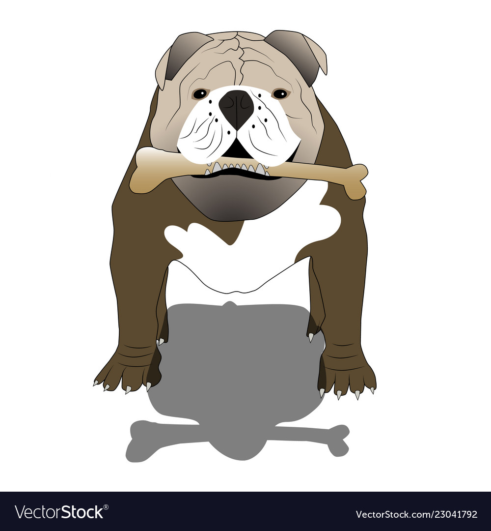 English bulldog with a bone and shadow- isolated