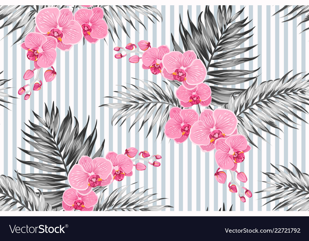 Pink purple orchid phalaenopsis exotic flowers