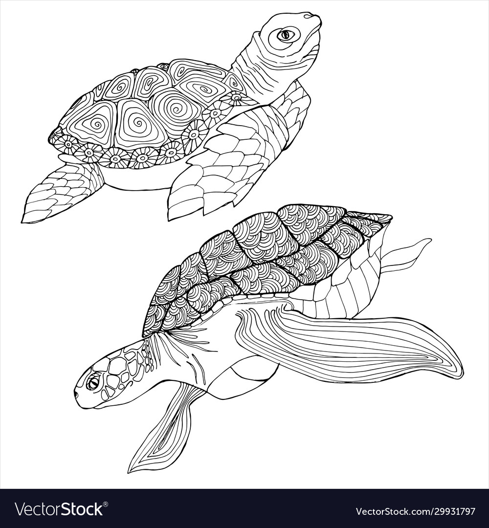 - Sea Turtle Coloring Book Hand Drawing Coloring Vector Image