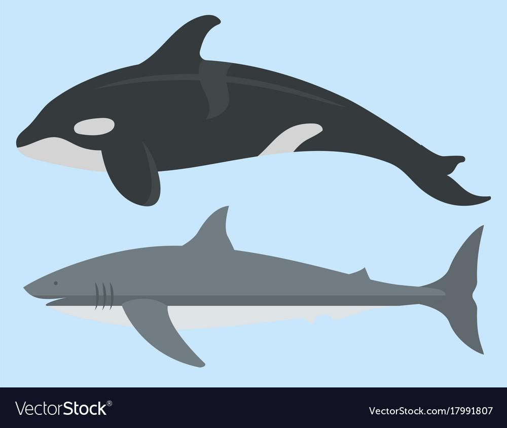 Sea animals creatures characters cartoon