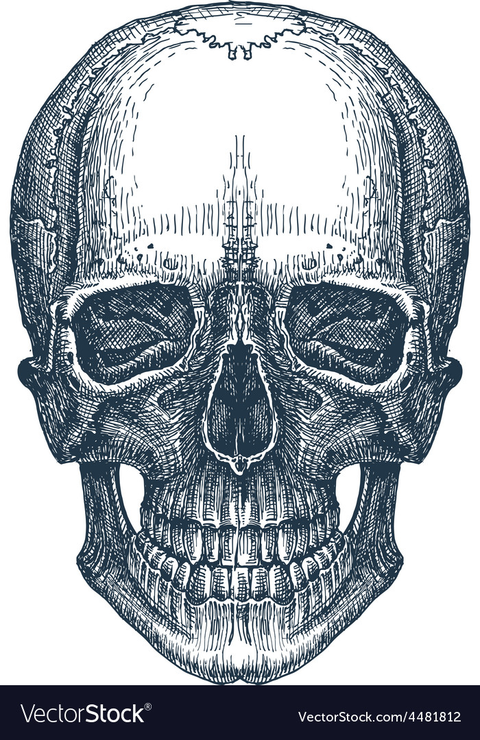 Skull logo design template fresh death vector image