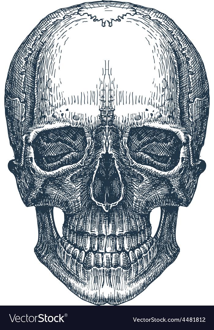 Skull logo design template fresh death