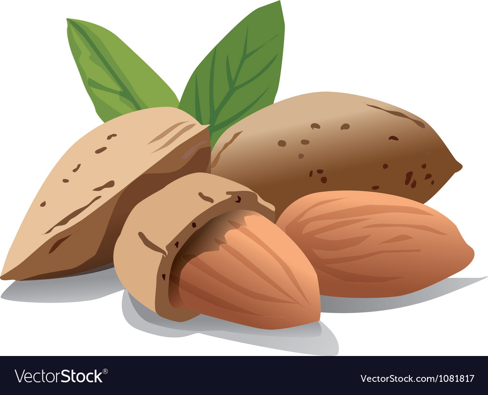 Almonds vector image