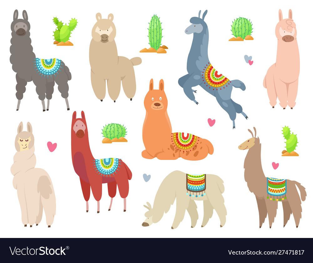 Cute llamas and alpacas funny smiling animals