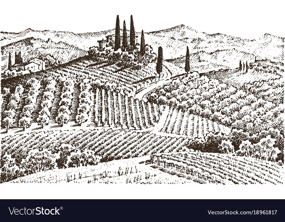 Rustic vineyard rural landscape with houses vector image