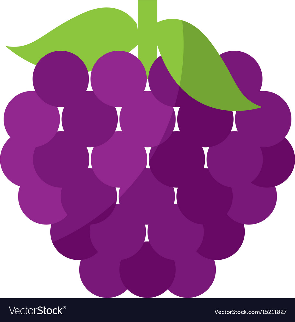 Grapes fresh fruit isolated icon vector image