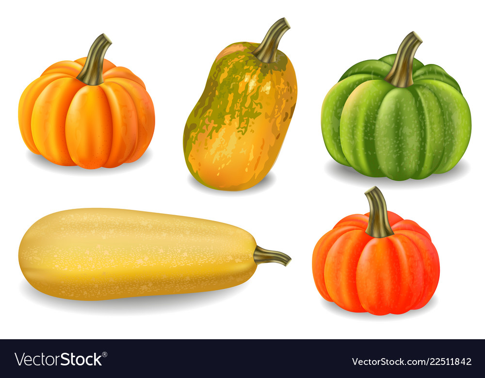 Autumn colorful pumpkins isolated fall