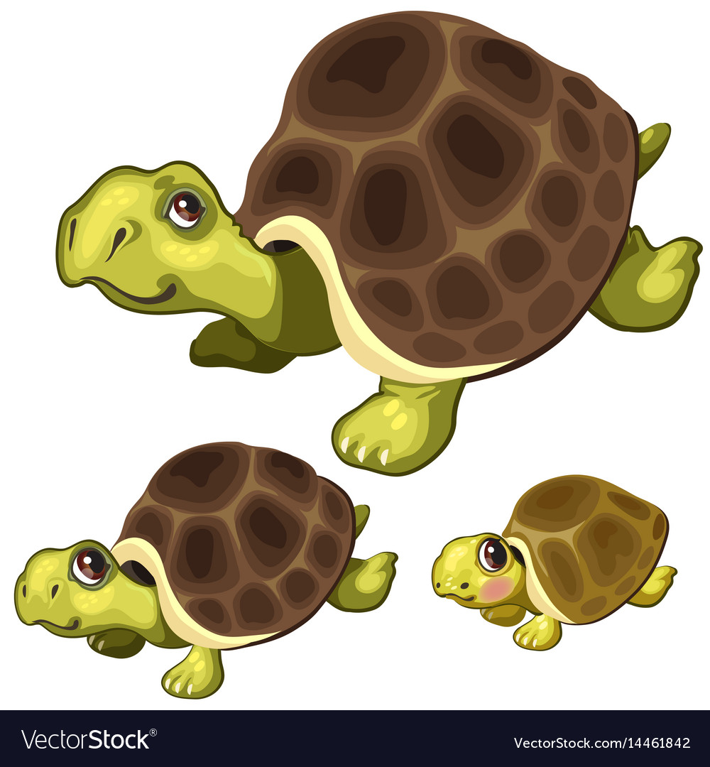 Cartoon turtle on white background animals