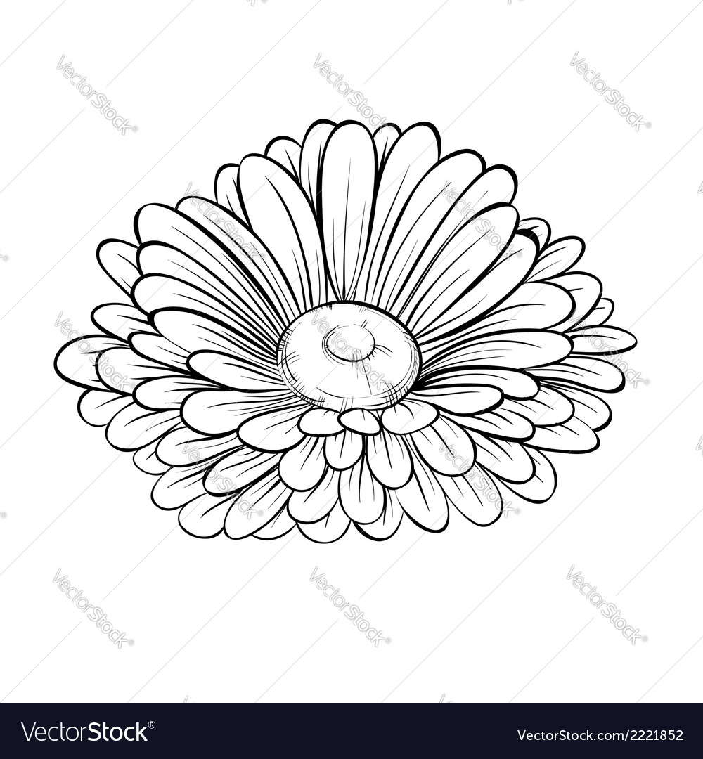 Black and white daisy flower isolated vector image