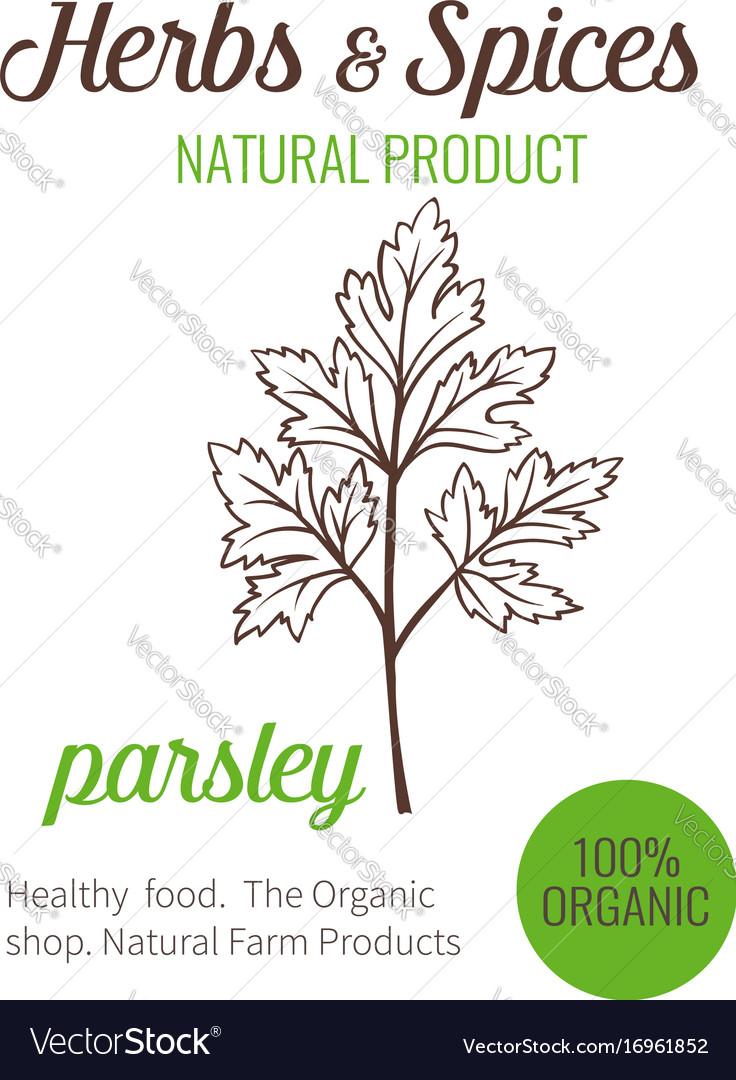 Hand drawn parsley