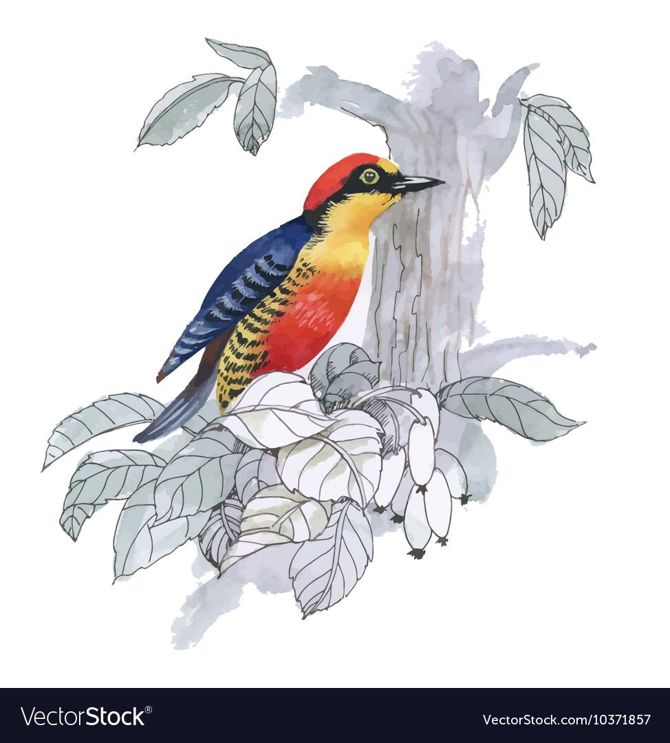 Watercolor exotic bird