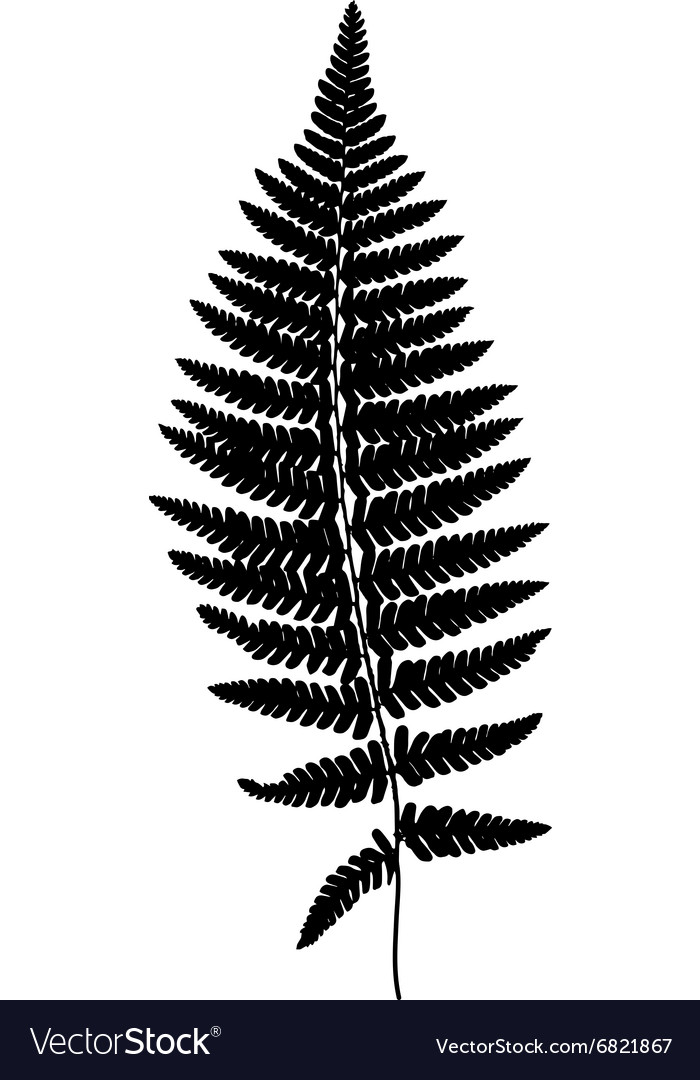 Fern frond black silhouette Forest concept
